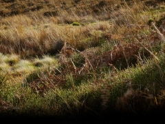 dark-long-mynd-giantesses-one-fairy-bit-smaller_83