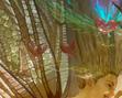 tmb000021_Love_bubble_fairies