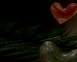 tmb000036_Love_bubble_fairies