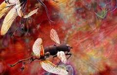 wasp-white_11