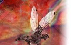wasp-white_12