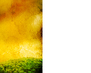 tmb000021_Stokesay_red_kites