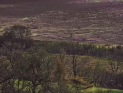 clee-hill-man-grayer-sky-in-diff-skies_23
