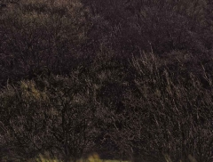 clee-hill-man-grayer-sky-in-diff-skies_37