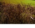 tmb000021_Wrekin_with_red_kites