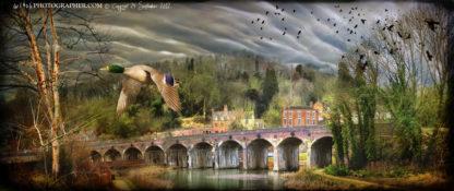Coalbrookdale Viaduct with mallard