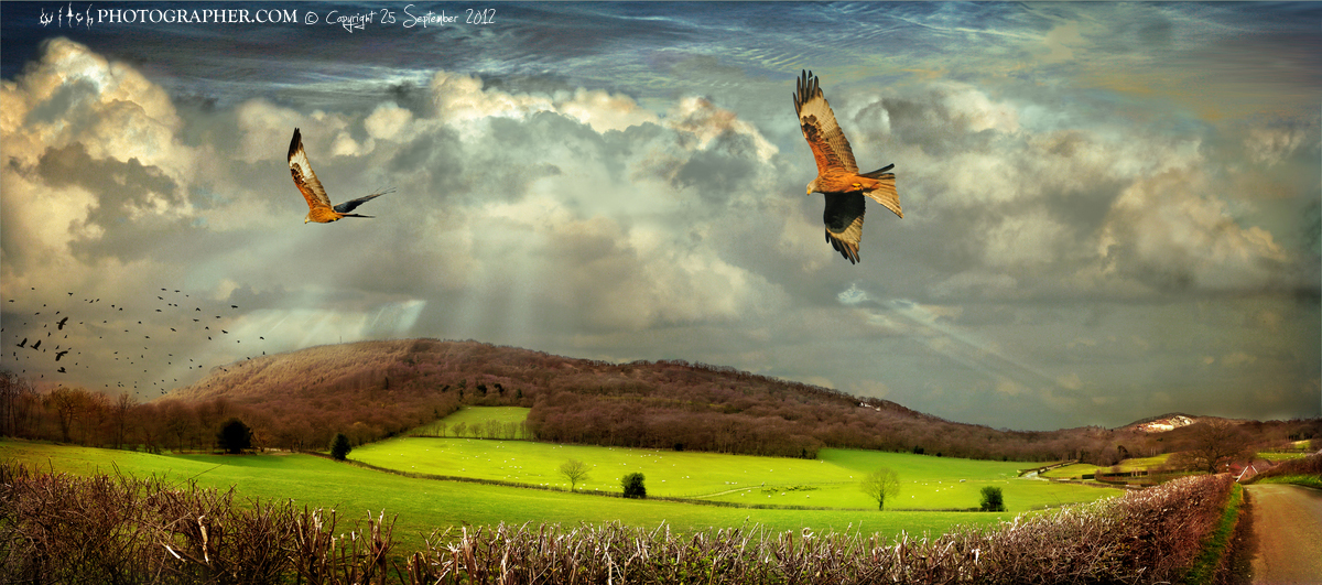 Wrekin with red kites