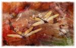 Stiperstones Winter Solstice - skeleton fairies - collection